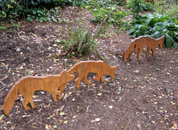 Urban Foxes. Photo credit Kathy Herbert.