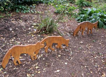 Urban Foxes. Photo credit Kathy Herbert.