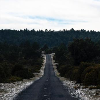 Guillaume Combal, Road through the forest. Landscapes series, 2010. Ph credit & courtesy of the artist